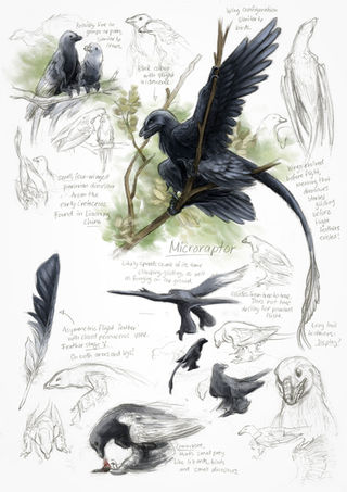 Feathered Dinosaurs – A Field Study