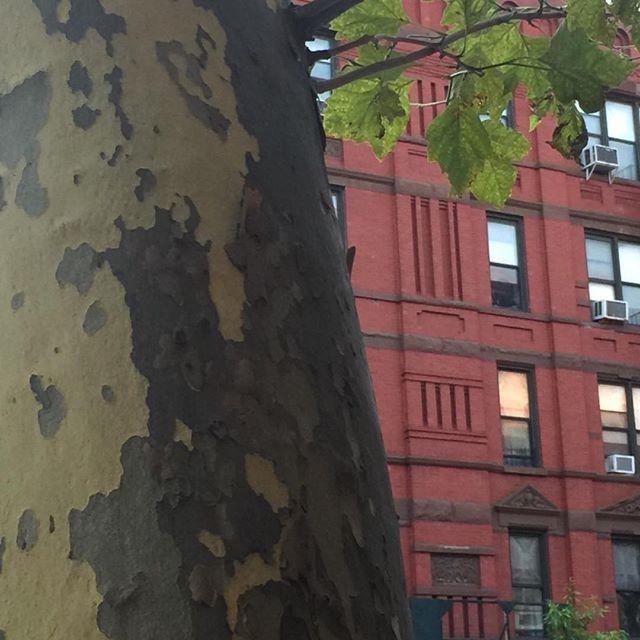 Harlem Trees