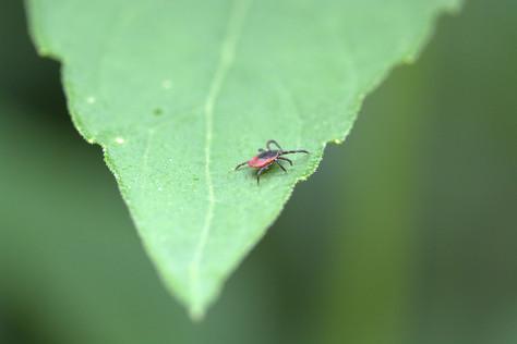 Powassan Virus - the Uglier, Nastier New Kid on the Block
