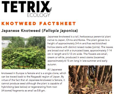 TETRIX Ecology - Knotweed Factsheet