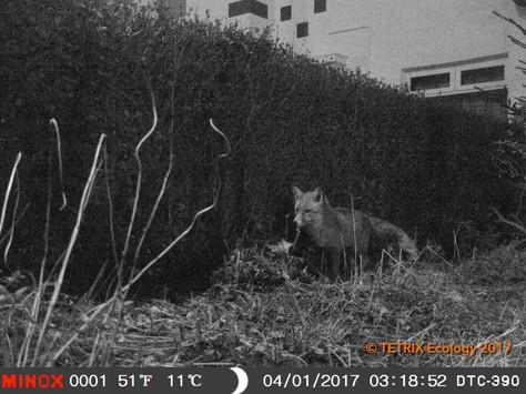 Field Trialling the Minox DTC 390 Wildlife Camera