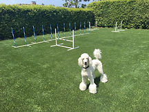 Artificial Turf Blends for Pets