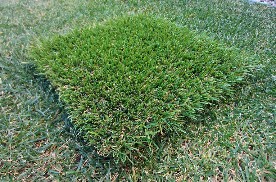Real Grass versus Synthetic Turf