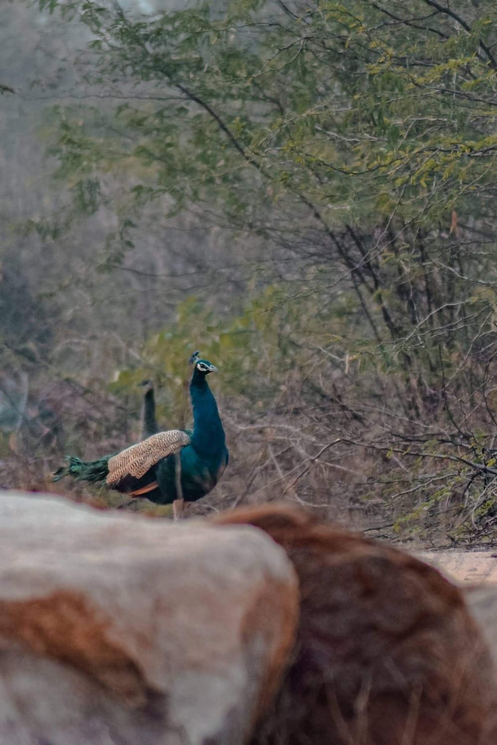 at Bhardwaj Lake trek, Delhi