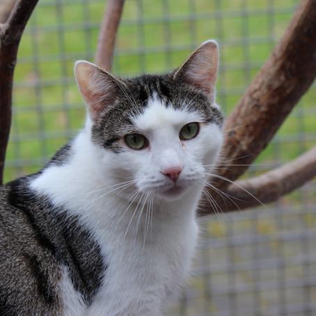Hauskatzenabschuss Petition zur Änderung des Niedersächsischen Jagdgesetzes