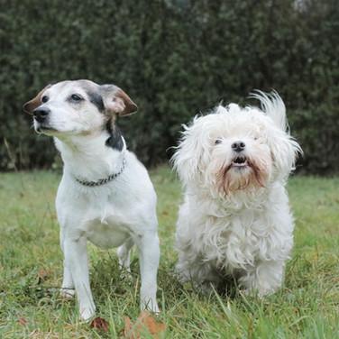 Susi und Flocke