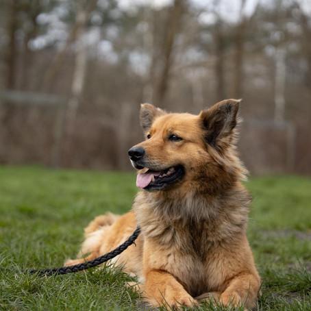 Petition zur Änderung des Niedersächsischen Hundegesetzes