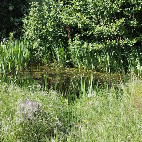Der Tierheim Teich