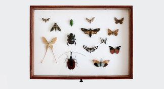 Entomological showcase