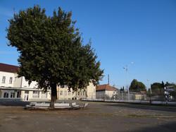 Stejarul batran