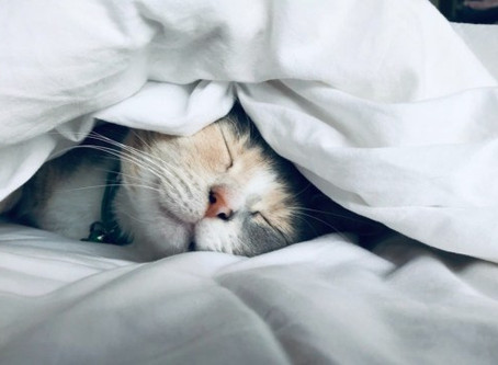 Are you having a NAP?