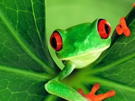 The Frog who is deaf