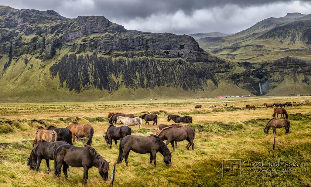 Caballos y Montañas Islandia