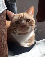 Dexter9-cat.jpeg