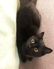 Gabriel-cat.jpeg