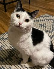 Dahlia8-cat.jpeg