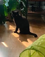 Naomi7-cat_edited.jpg