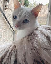 Ralph2-cat.jpeg