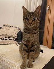 Marnie1-cat.jpeg