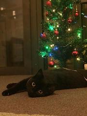 Gabriel1-cat.jpeg