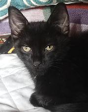Callum1-cat.jpeg