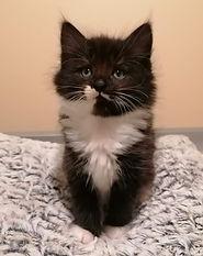 Willow-kitten.jpeg