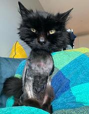 Madelaine1-cat.jpeg