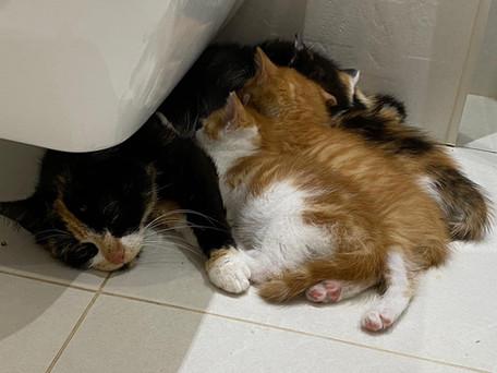 Taking Care of Foster Kitties