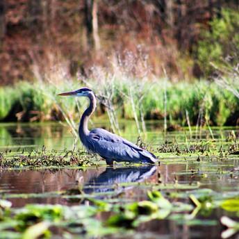 The Decline of America's Wetlands