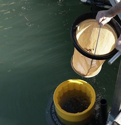 Seabin cleaning water river ocean