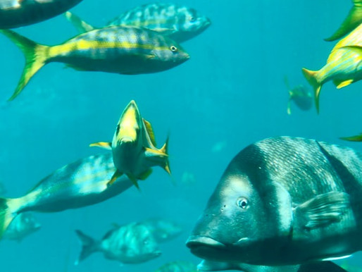Ocean Warming and Marine Life Migration