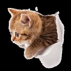 Katze guckt sich alles an