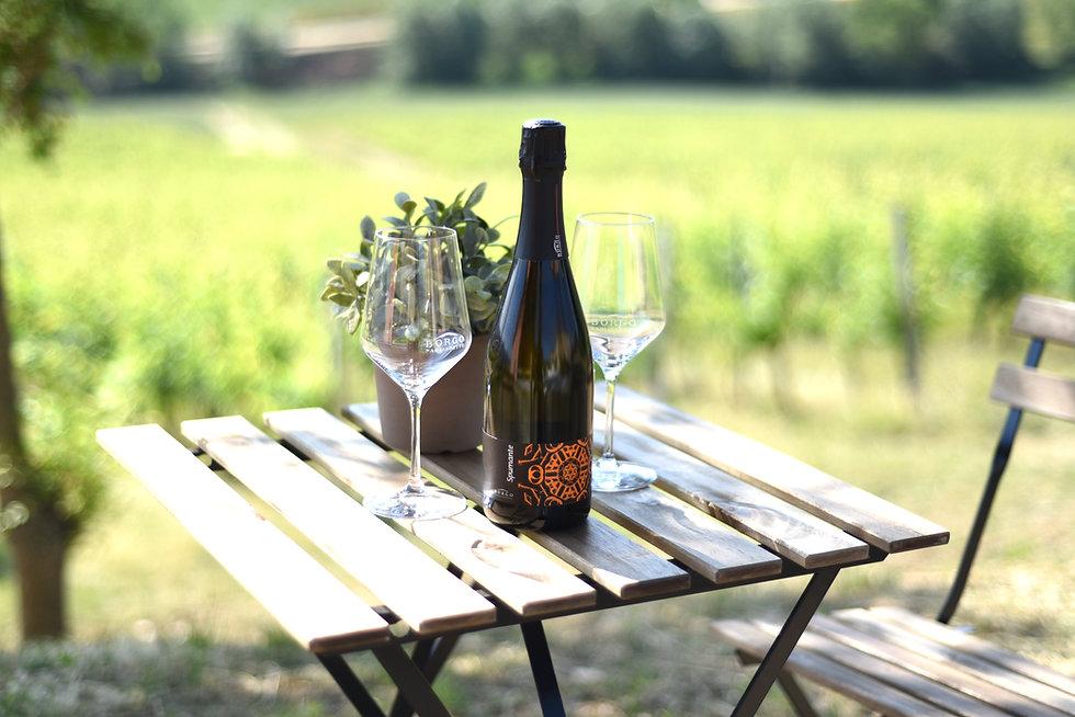degustazione assaggio cantina marche vino biologico matelica bisci belisario collestefano