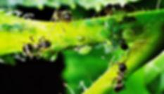 Synergie dans les éco-système naturel