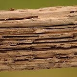 Prevent-Termite-Damage-in-Wood-Windows.j
