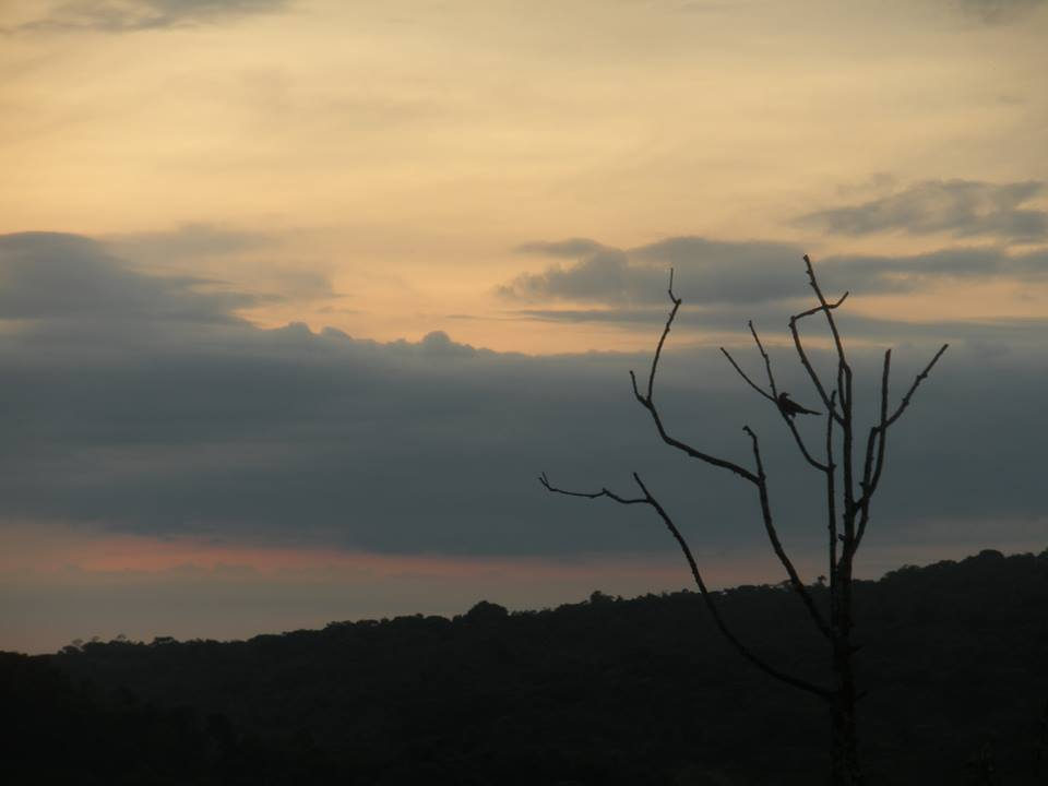 Sunrise and Oropendola in Tree