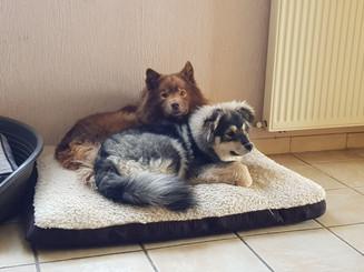 Leïa et Pixie
