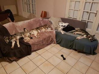 Rien de mieux qu'un canapé