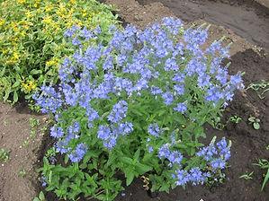 цветы 25 258_edited.jpg