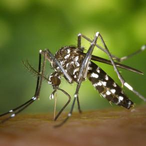 Doença do vírus Zika
