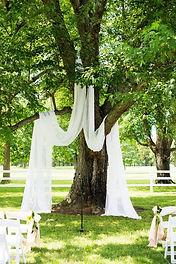 tree drapery