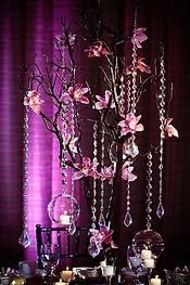 manzanita branchs