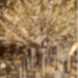 Screen Shot 2020-04-14 at 8.34.40 PM.png