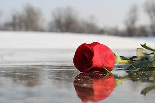 red-rose-on-ice-3189026_1920.jpg