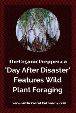 Wild Plant Foraging