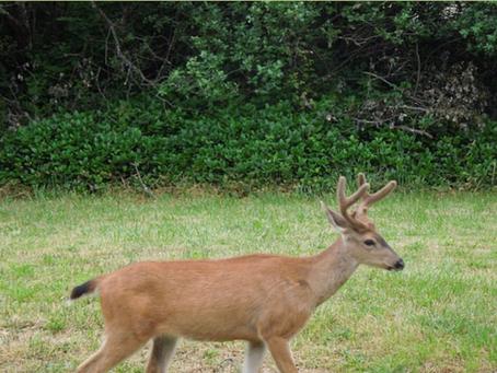 Preparing for Deer Season