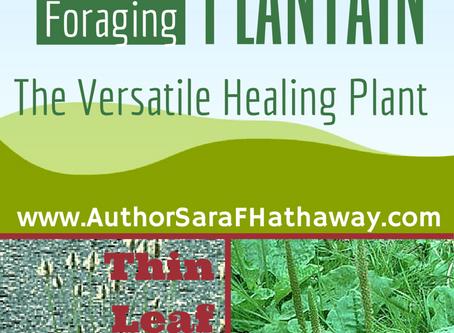 Plantain: The Versatile Healing Plant