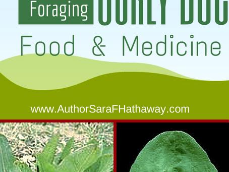 Plant Identification: Curly Doc
