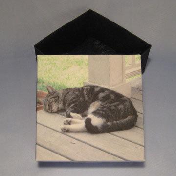 Square - Masu, Cat Nap
