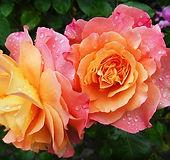 flowers-174817_640.jpg